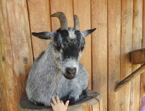 Ausflug in den Tierpark Goldau